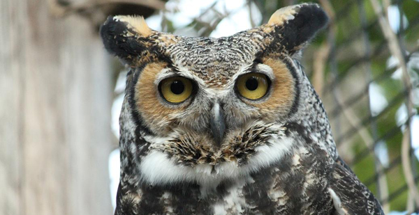Downs Park Adopt-An-Owl