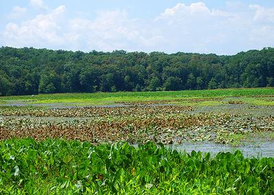 Oxbow Natural Area
