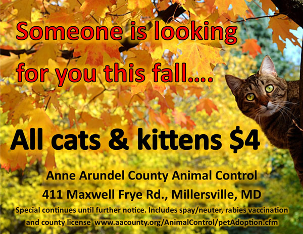 Fall Cat and Kitten Special