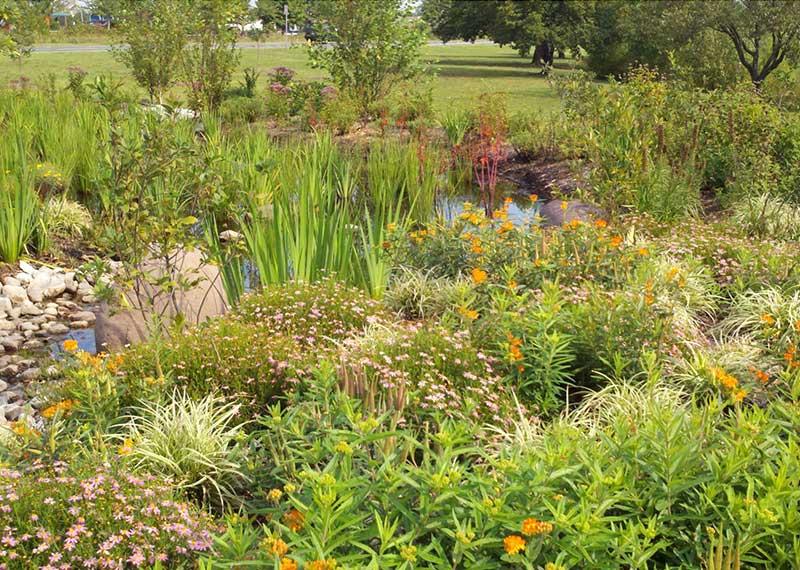 Rain Gardens Anne Arundel County Md
