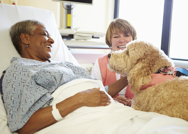 Dog visiting a patient in a hospital bed.