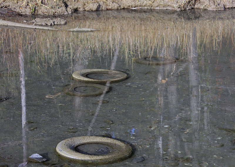 old tires in a pond